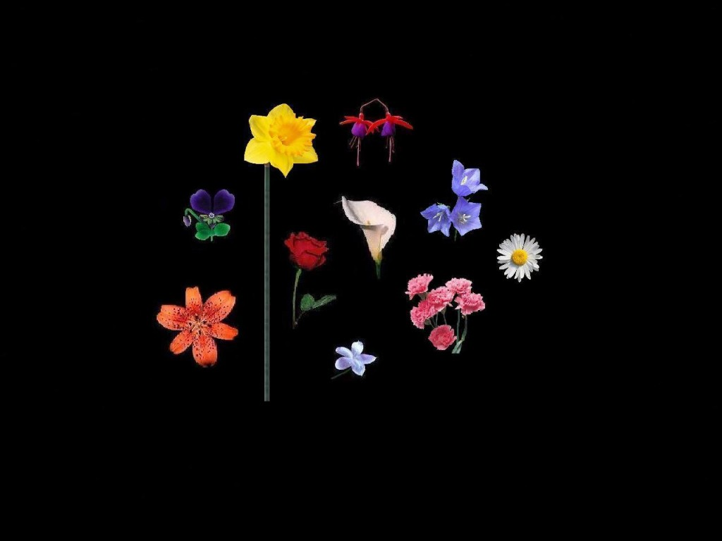 12 The Flowers